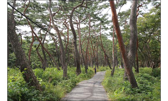 아름다운 자연을 품은 길 천년의숲길(봉곡사)